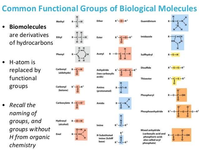 Principles of Biochemistry/Biomolecules