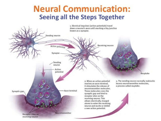 Image result for neural communication