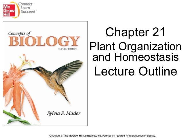 Chapter 21                                  Plant Organization                                  and Homeostasis           ...