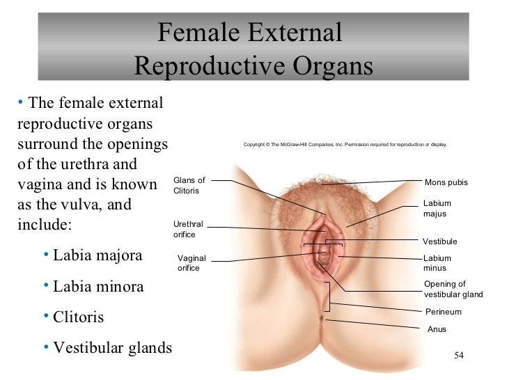 Swollen vagina hole — img 8