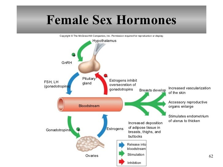 What Is The Female Sex Hormone 41