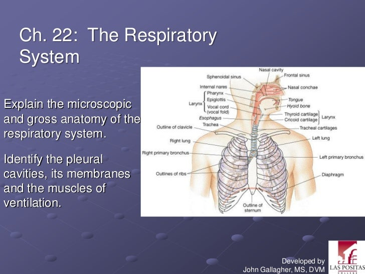 Chapter Respiratorymarieb