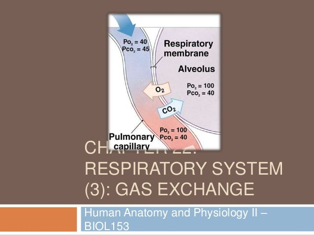 Chapter 22: Respiratory System (#3)