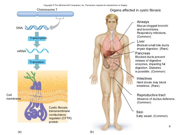 Chapter 24 Genetics And Genomics