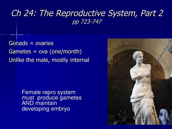 Ch 24: The Reproductive System, Part 2 pp 723-747 Gonads = ovaries Gametes = ova (one/month) Unlike the male, mostly inter...