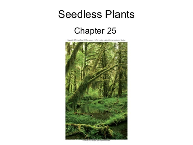 Seedless Plants Chapter 25