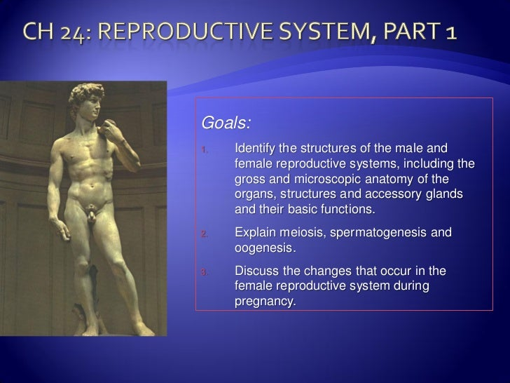 Goals:1.   Identify the structures of the male and     female reproductive systems, including the     gross and microscopi...