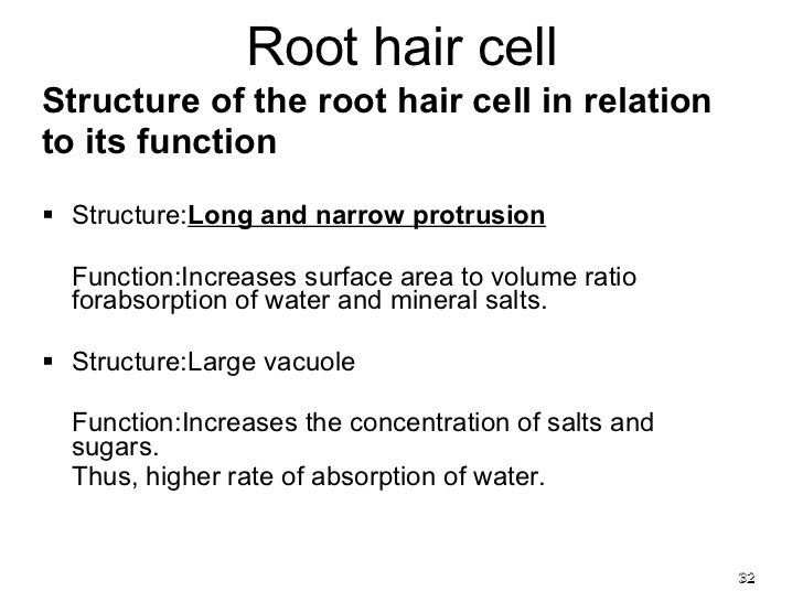 Chapter 2 cells 2011 membrane cytoplasm 32 structure of the root hair cell publicscrutiny Choice Image