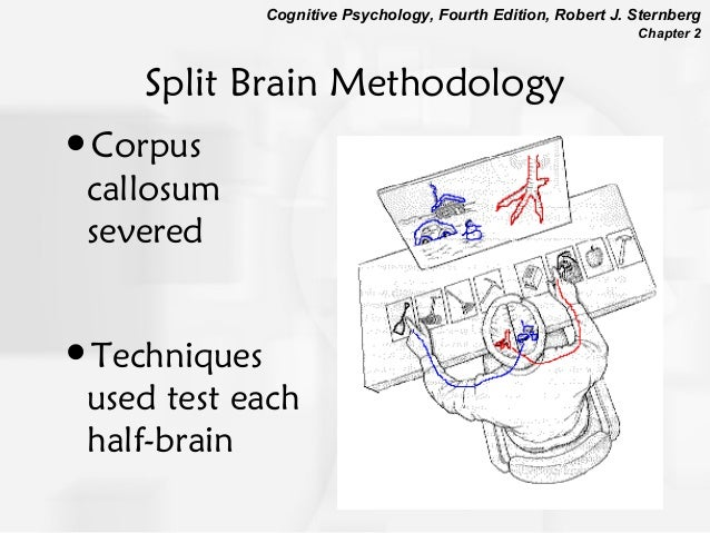 Chapter2cognitiveneuroscience4346