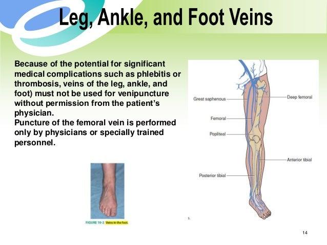 phlebotomy related vascular anatomy