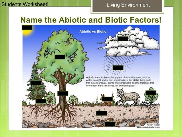 Glencoe Biology Chapter 2 Principles of Ecology – Glencoe Biology Worksheets
