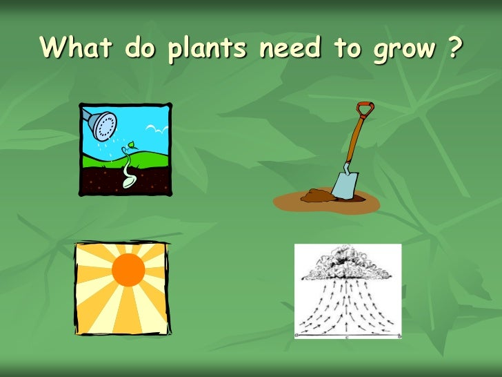 Chapter 2 what do plants need to grow