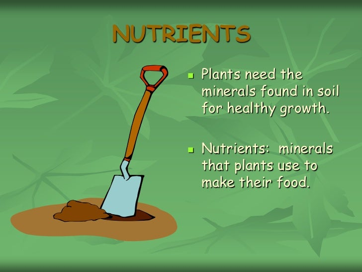 Use Food To Make Water