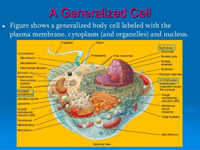 Excellent Generalized Cell Label New Model Wiring Diagram Wiring Digital Resources Indicompassionincorg