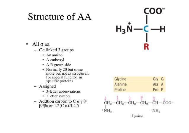 Learning keys lehninger chapter 3 amino acidspeptides and protei learning keys lehninger chapter 3 amino acidspeptides and proteins thecheapjerseys Gallery