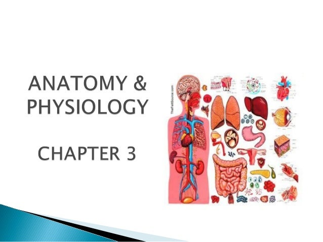 Chapter 3 anatomy and physiology