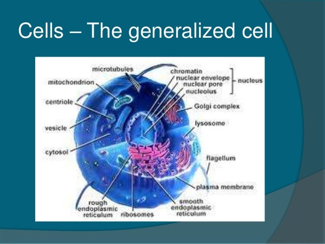 Chapter 3 Cells And Tissues