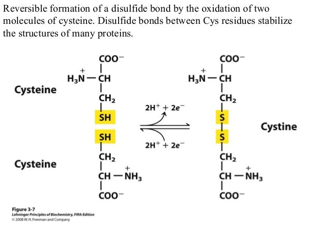 Amino acids biochemistry and nutrition for Soil biology and biochemistry