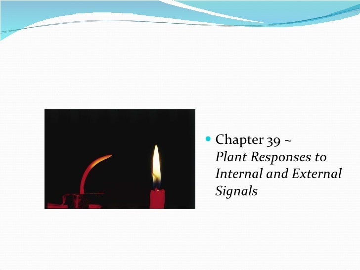 <ul><li>Chapter 39 ~   Plant Responses to Internal and External Signals </li></ul>