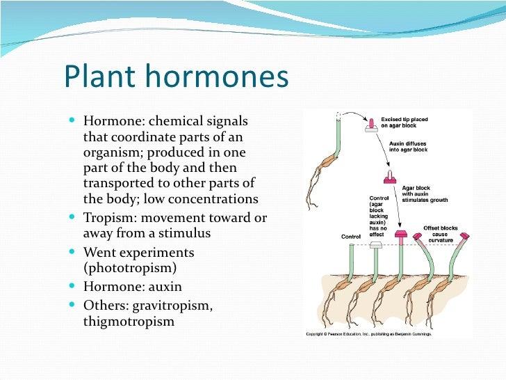 Plant hormones. Ppt video online download.