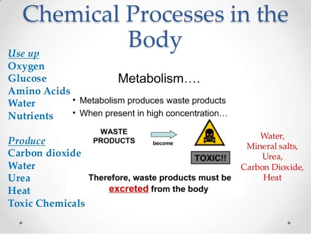 Chemical Processes in theUse up           BodyOxygenGlucoseAmino AcidsWaterNutrients                          Water,Produc...