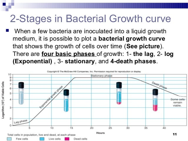understanding the growth dynamics of e coli In the present study, we sought to better understand the adaptation of e coli to environments that vary in oxygen availability, to provide insights into evolution in its natural habitat, which consists of passage through gastrointestinal tracts experimental growth of e coli was modelled on the prominent ltee.
