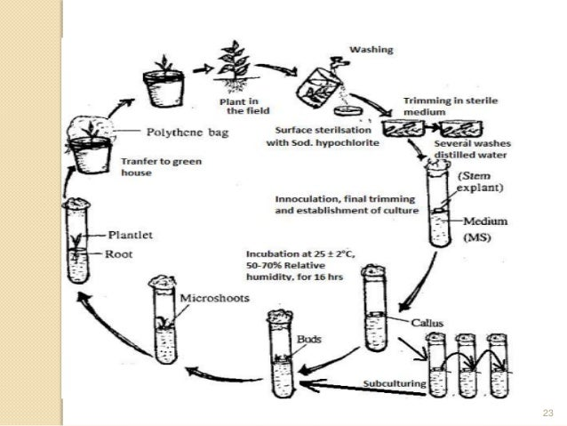 Chapter 3 Plant Tissue Culture