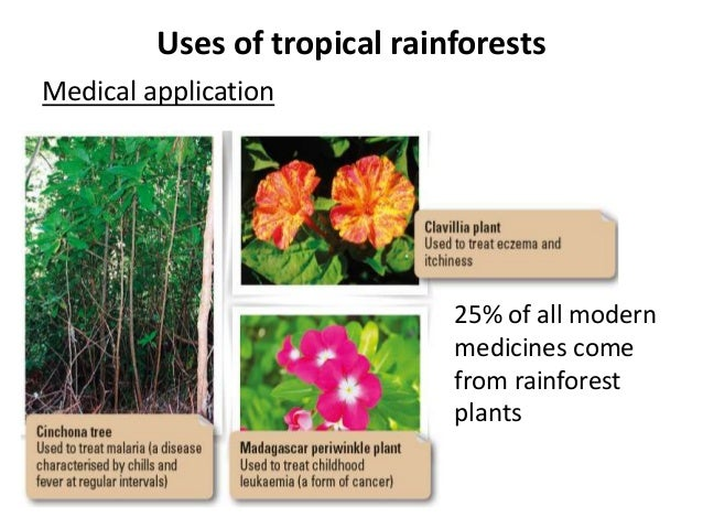 medicinal uses of rainforest plants essay