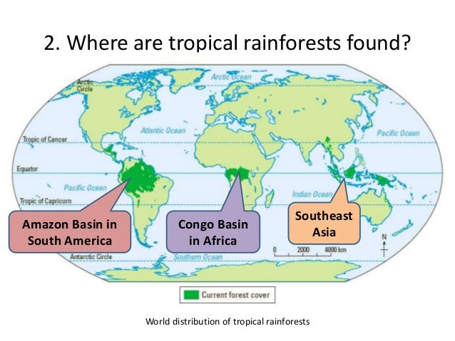 Tropical Rainforest In Africa Map.Sec 1 Chapter 3 Tropical Rainforests