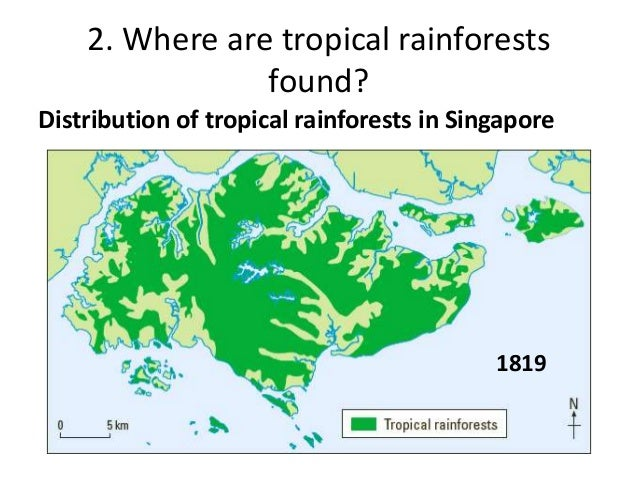 A look at the many types and distribution of rainforests
