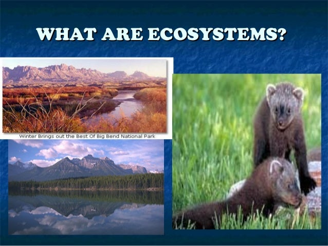 WHAT ARE ECOSYSTEMS?WHAT ARE ECOSYSTEMS?