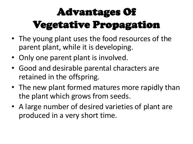 What are the advantages of asexual reproduction photo 616