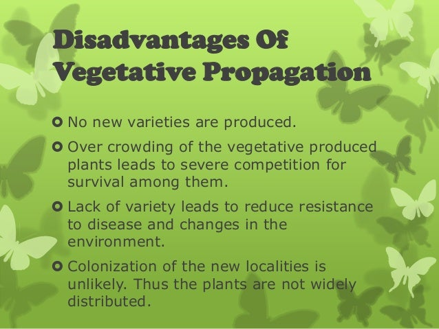 competition among plants Intra and interspecific competition among invasive  sensitive to competition than adult plants (foster 1999 suding and goldberg 1999) other research, however, has indicated that competition may be  would vary among harvest time during early stages of plant growth based on the expectation that fast.