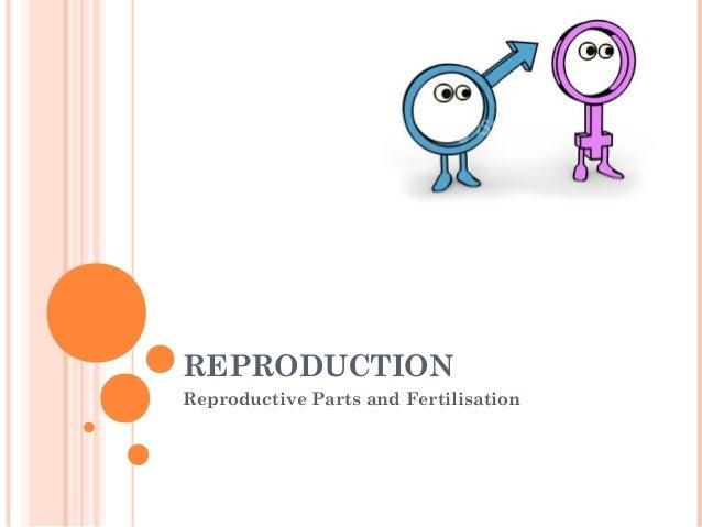 REPRODUCTIONReproductive Parts and Fertilisation