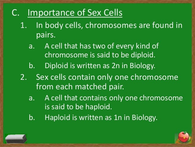 Importance of sex to the body