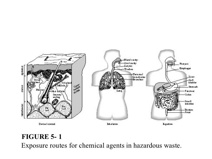 FIGURE 5- 1Exposure routes for chemical agents in hazardous waste.