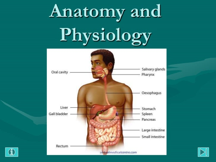 Anatomy And Physiology Gastrointestinal Tract