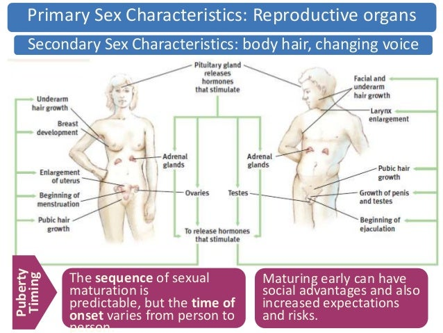 Development of secondary sexual characteristics is due to