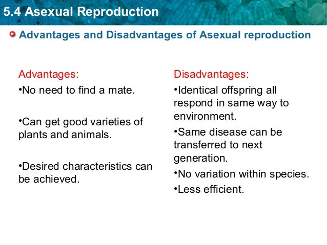 Advantages and disadvantages of asexual reproduction in cells