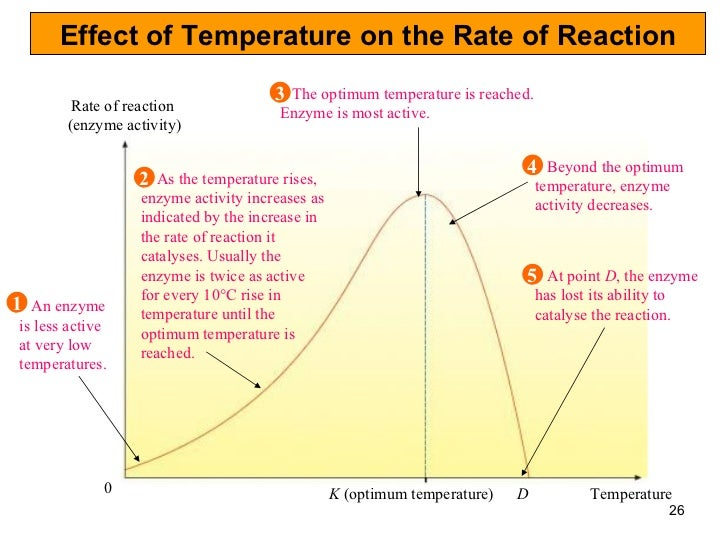 effect of temperature on an enzyme Pre-lab exercise 2: the effect of temperature on enzyme activity 9  exercise 1:  the effect of substrate concentration on enzyme activity 10-.