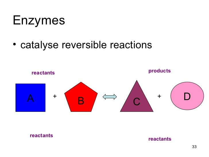 What is synthesising proteins