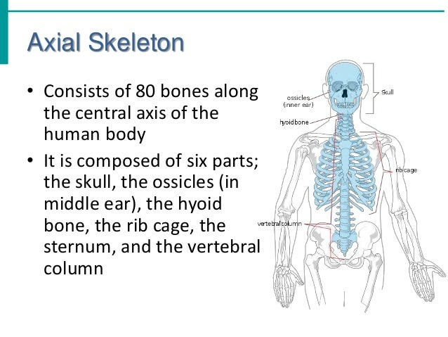 chapter 5 the skeletal system V chapter 5 the integumentary system 29  115 muscles of the pectoral girdle and upper limbs  list and describe the functions of the skeletal system.