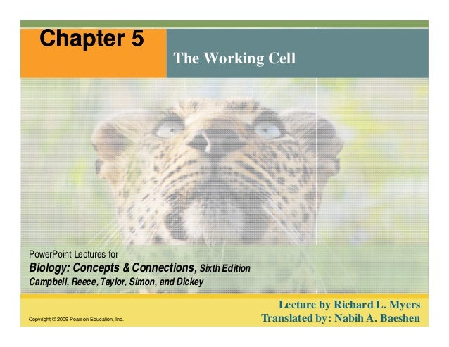 Chapter 5  The Working Cell  PowerPoint Lectures for  Biology: Concepts & Connections, Sixth Edition  Campbell, Reece, Tay...