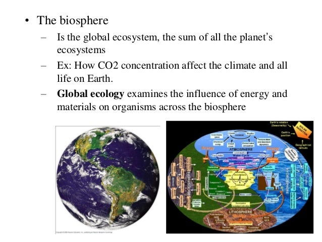 overview of ecology New aqa trilogy biology revision resource to summarise cell biology and microscopy for student to fill in.