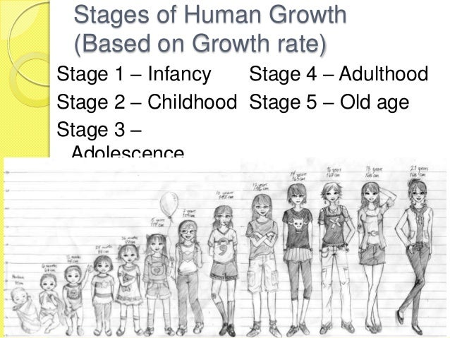 the various stages of development in humans Transcript of human growth & development - life stages life stages infancy growth measurable physical changes that occur throughout a person's life development the.