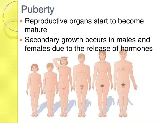 5 stages of puberty male