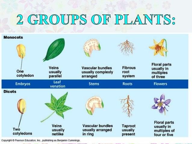 Chapter 5 : How Plants Survive Slide 3