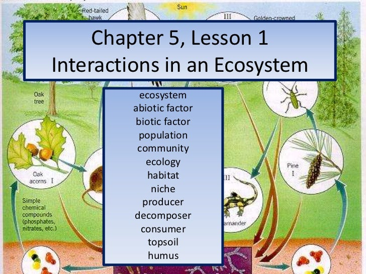 Chapter 5, Lesson 1Interactions in an Ecosystem<br />ecosystem<br />abiotic factor<br />biotic factor<br />population<br /...