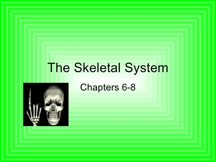 The Skeletal System Chapters 6-8