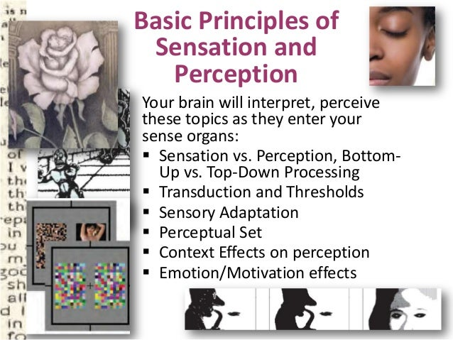identify the biological factors that influence sensation and perception